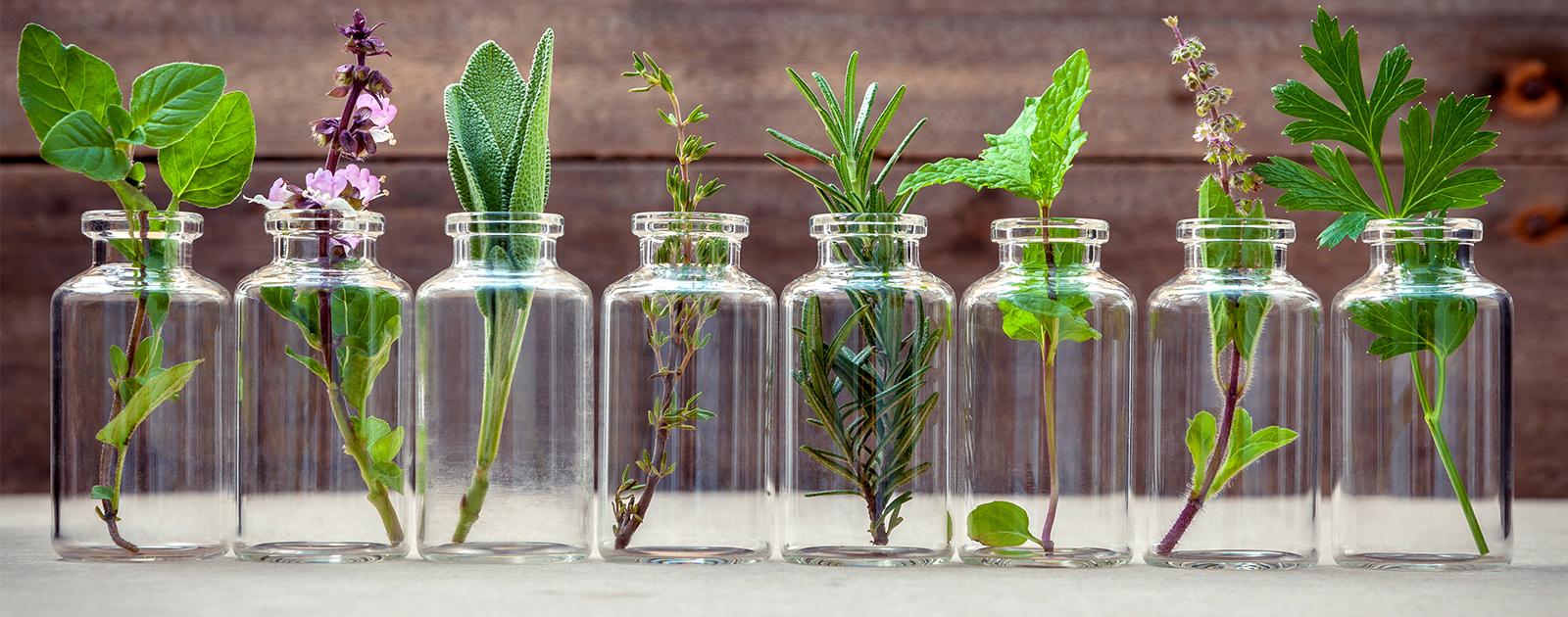 Ces plantes qui nous font du bien