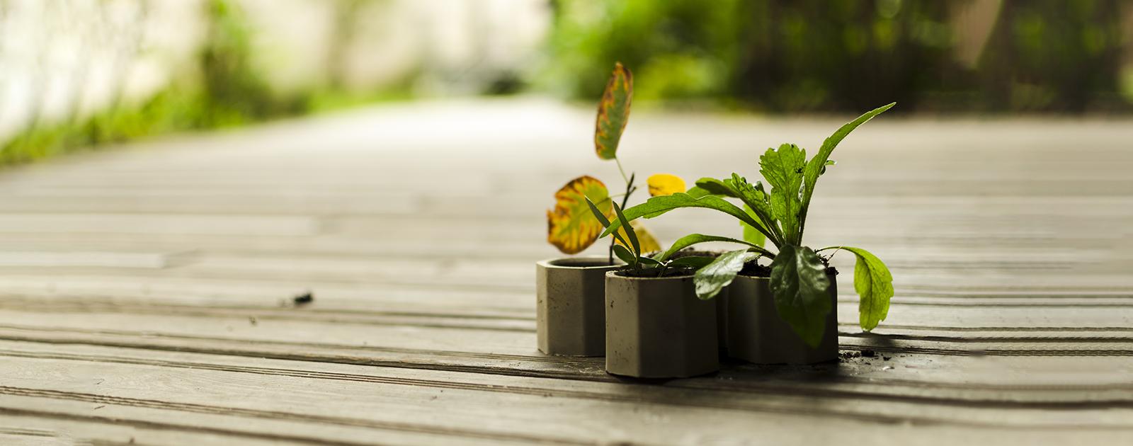 Bétonne ta plante  !