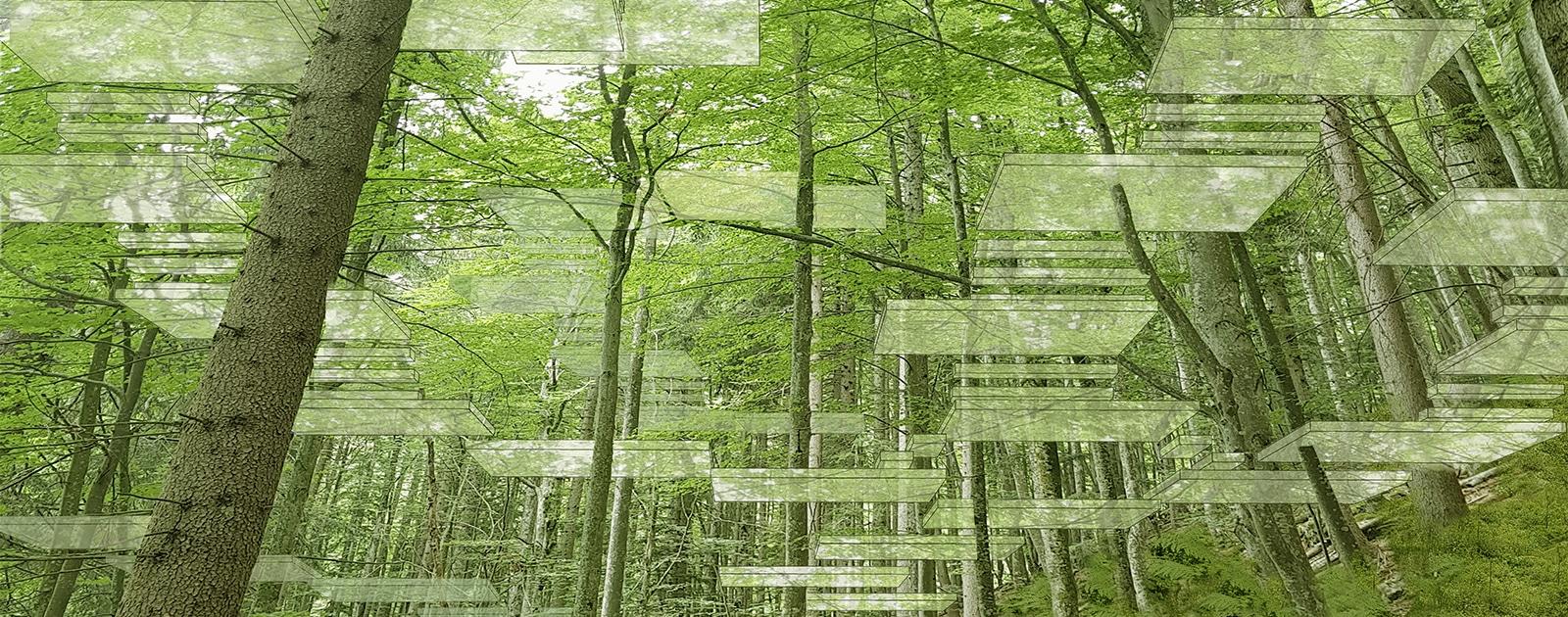 Dans les branches, une cabane habitée