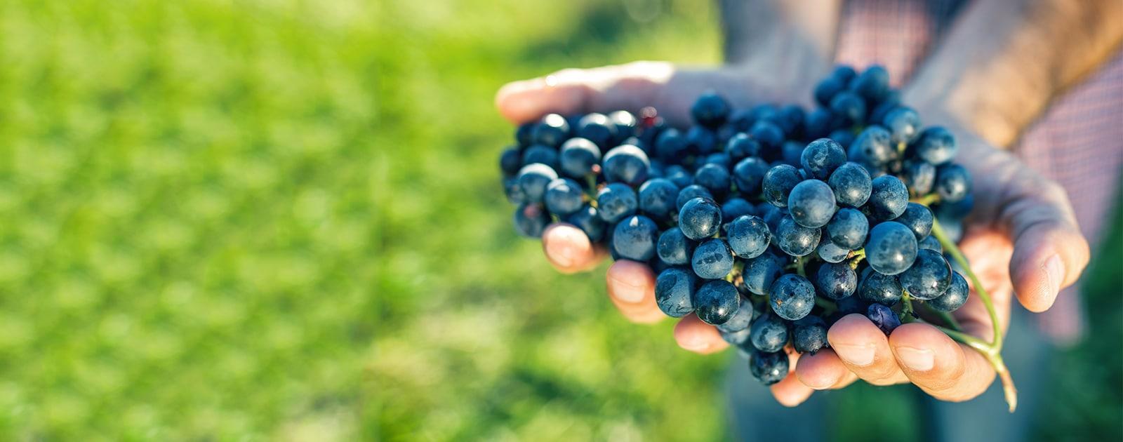 Comment devenir un expert du vin bio ?